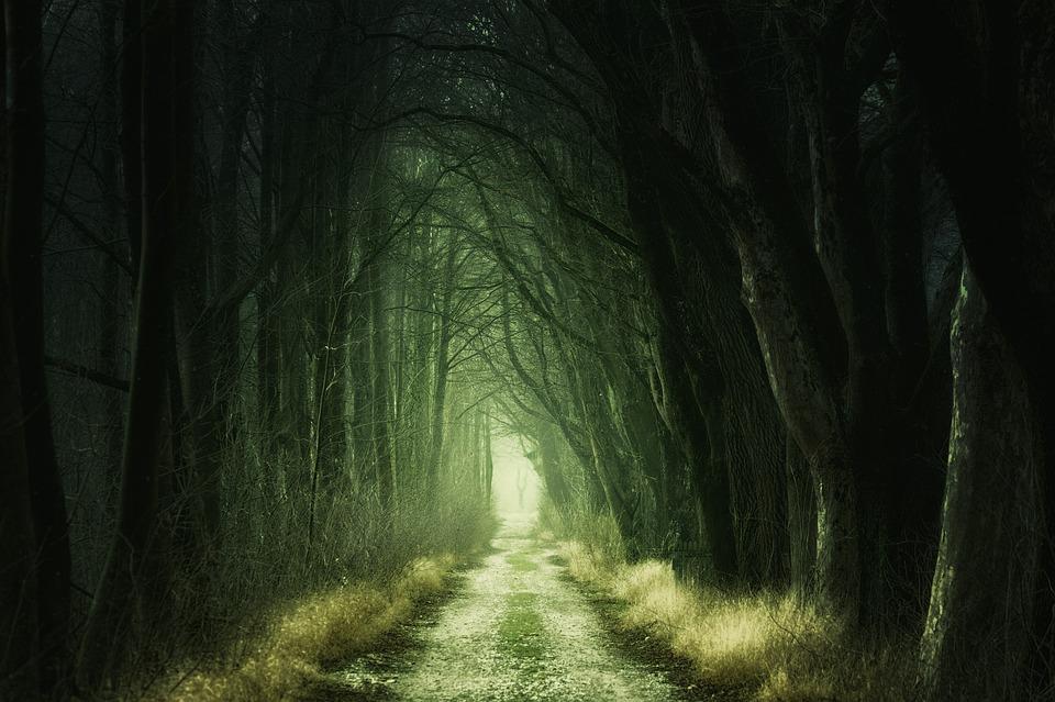 Peur dans une forêt.