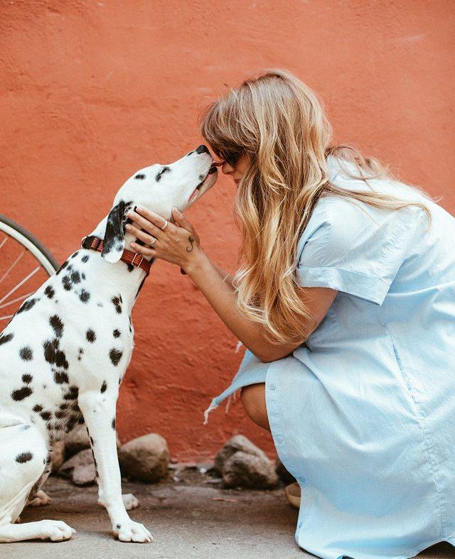 Des animaux de compagnie pour réduire le stress